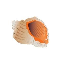 Seashell eps10 vector image