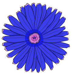 blue gerbera drawing by hand vector image
