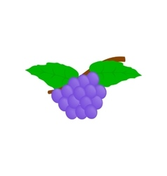 Blue grapes bunch isometric 3d icon vector