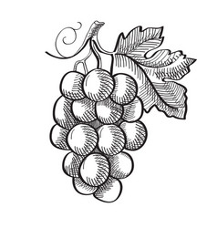 Engraving fresh fruit template vector