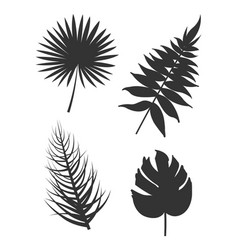 leaf collection silhouette vector image