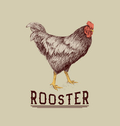 Rooster drawn in hand drawn style vector