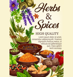 spices culinary herbs condiments and seasonings vector image