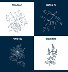 Collection of four hand drawn medicinal vector