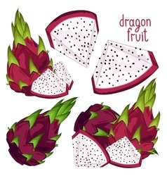 Dragon Fruit Isolated vector