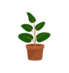 green decorative houseplant for interior design vector image
