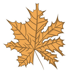 maple leaf drawing by hand vector image