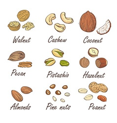Set of hand sketched nuts on white background vector