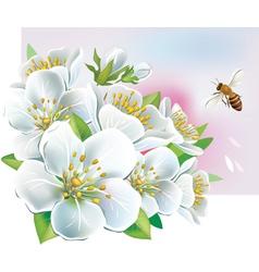summer flowers vector image