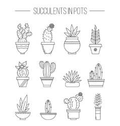 Set of succulent plants and cactuses in pots vector image