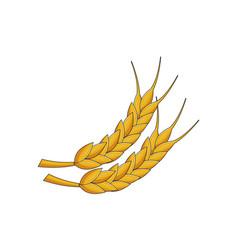 ears wheat vector image