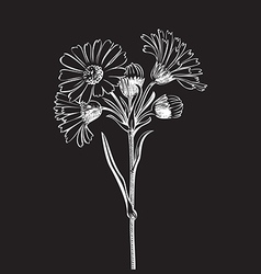 hand drawn bouquet daisy flowers isolated vector image