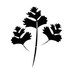 Parsley leaves silhouette vector