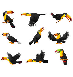 Set of toucans cartoon vector