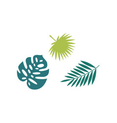 set palm tropical leaves exotic shape flat vector image