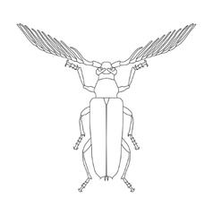 Skalbaggar beetle Cyriopalus wallacei Sketch of vector