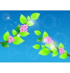 Cherry blossom against blue sky vector image