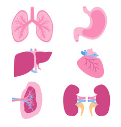 internal organs set viscera set flat style vector image vector image