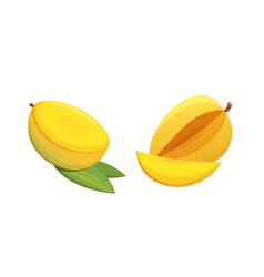Mango yellow fruit isolated vector