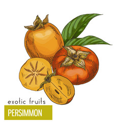 Persimmon slice fruits and leaves vector
