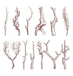 Sketch wood twigs broken tree branches set vector