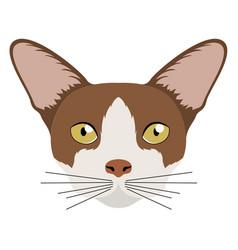 Thai cat avatar cat breeds vector