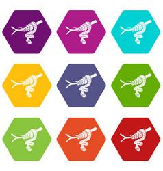 tree snake icons set 9 vector image