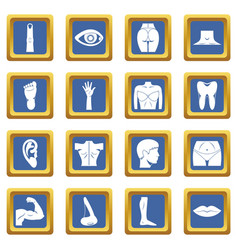 Body parts icons set blue vector