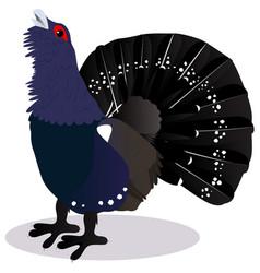 capercaillie bird vector image