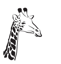 Giraffe head on white background wild animals vector