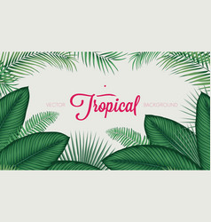 Summer tropical foliage calathea ornata leaves vector