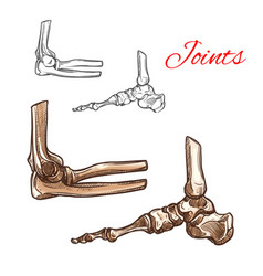 bone and joint sketch of human foot elbow ankle vector image