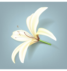 Realistic Lily Flower vector image vector image