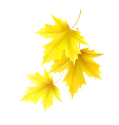autumn background with yellow maple leaf leaves vector image