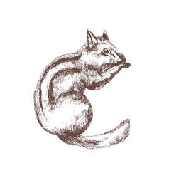 Chipmunk hand drawn with contour lines on white vector