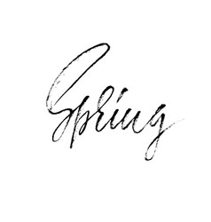 Handwritten lettering spring hand drawn vector