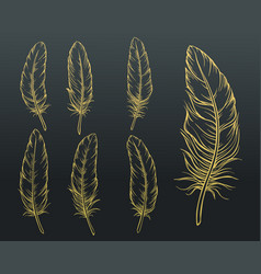 sketch feathers set vector image