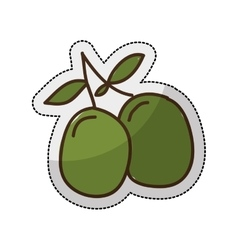 olive plant isolated icon vector image vector image