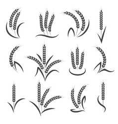 wheat or barley ears branch vector image vector image