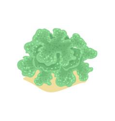 Cartoon green algae from tropical vector