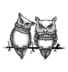 cartoon image of cute owls vector image