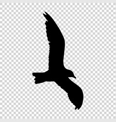 detailed bird black silhouette isolated vector image