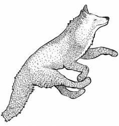 foxy fox vector image
