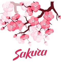 Japanese sakura background with stylized flowers vector image