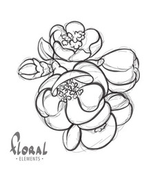 delicate flowers of apple vector image vector image