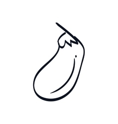 Fresh eggplant vegetable vector image