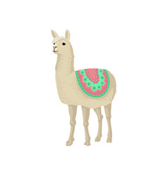 Graceful llama alpaca animal in ornamented poncho vector