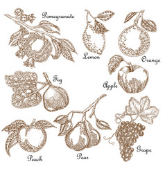 Hand drawn sketch fruit set vector