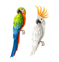 realistic parrots macaw and cockatoo set vector image