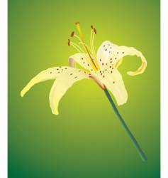 lily vector image vector image